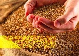 Grains in your diet